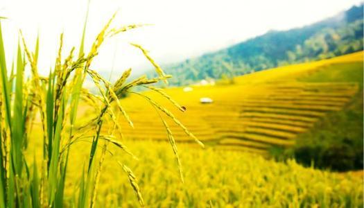 农业可行性研究报告撰写技巧(附带模板)